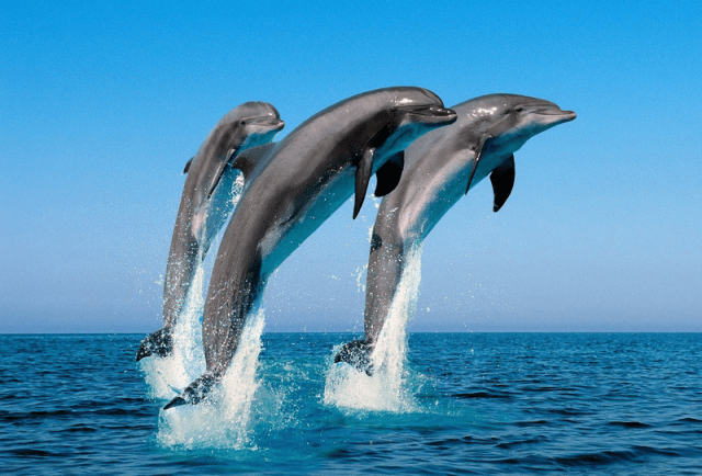Dolphin-sea-jumping-water